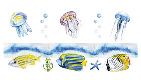 Watercolor fish, jellyfish. Watercolor fish and jellyfish. Hand painted realistic illustration Stock Photo