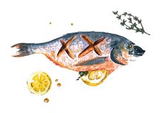Watercolor fish cooked with lemon and rosemary  on white background. Watercolor fish Sea Bream cooked with slice of lemon and rosemary  on blue and white Stock Image
