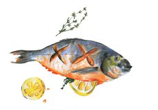 Watercolor fish Sea Bream cooked with slice of lemon and rosemary on white background royalty free illustration