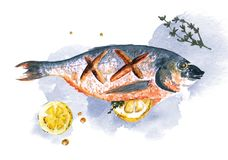 Watercolor fish Sea Bream with lemon and rosemary  on blгу background. Watercolor fish Sea Bream cooked with slice of lemon and rosemary  on blue and white Stock Photography