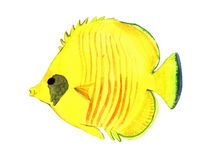 Watercolor fish. Sea fish illustration isolated on white background.  Stock Image