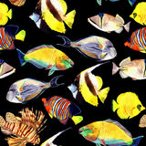 Watercolor fish. Sea fish set Stock Images