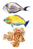 Watercolor fish. Sea fish set Stock Photos