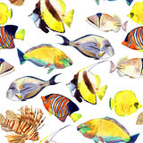 Watercolor fish. Sea fish set illustration Stock Image