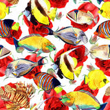 Watercolor fish. Sea fish set Stock Image