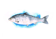Watercolor fish with yellow eye. On blue ice, on white background Royalty Free Stock Image