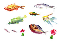 Watercolor fishes collection on white background. Royalty Free Stock Photography