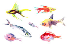 Watercolor fishes collection on white background. Royalty Free Stock Photos