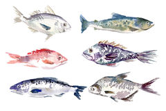 Watercolor fishes collection on white background. Royalty Free Stock Image