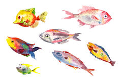 ПечатьWatercolor fishes collection on white background. Stock Image