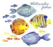 Watercolor fishes set. Collection of watercolor hand draw fish isolate on white background. Vector and raster versions Stock Photography