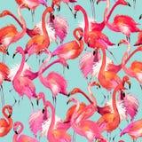 Watercolor Flamingo bird illustration. Watercolor Flamingo bird. flamingo and tropical nature watercolor pattern Flamingo Bird Background royalty free illustration