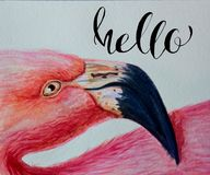 Watercolor flamingo pink hand painted illustration with inscription lettering Hello. bird profile portrait art print.  Royalty Free Stock Photography