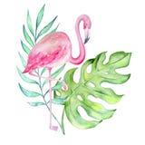 Watercolor Flamingo Tropical vector illustration