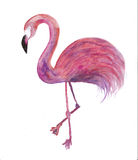 A watercolor flamingo on white Royalty Free Stock Photo