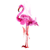 Watercolor flamingos Stock Image