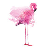 Watercolor flamingos Stock Images