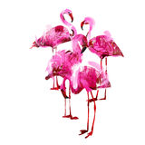 Watercolor flamingos Stock Photography