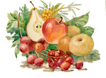 Watercolor Flora Collection: Fruits. Beautiful still life with fruit on a white background Royalty Free Stock Image