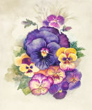 Watercolor Flora Collection: Viola Stock Photos