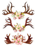 Watercolor floral antler. Stock Images