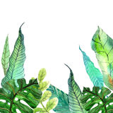 Watercolor Floral background with Tropical leaves stock illustration