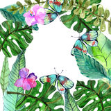 Watercolor Floral background with Tropical orchid flowers, leave Stock Photos