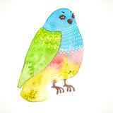 Watercolor floral bird Royalty Free Stock Photos