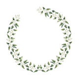 Watercolor floral border with eucalyptus leaves and flowers. Hand painted floral wreath with branches, leaves of eucalyptus isolat Royalty Free Stock Photo