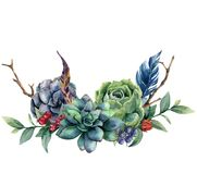 Watercolor floral bouquet with cactus and succulent. Hand painted berries, juniper, feathers, eucalyptus leaves isolated Royalty Free Stock Photo