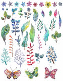 Watercolor floral collection, flowers, leaves and butterflies Royalty Free Stock Photography