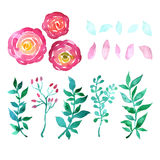 Watercolor  floral collection. With leaves and flowers Stock Photography
