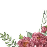 Watercolor floral composition of peony and greenery. Hand painted card with flowers and leaves isolated on white Royalty Free Stock Photos