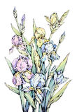 Watercolor floral design. Hand drawn watercolor floral design, bunch of irises Royalty Free Stock Photo