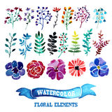 Watercolor floral elements Royalty Free Stock Image