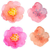 Watercolor floral elements for design Stock Photos