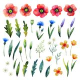 Watercolor floral elements. Poppies, cornflowers, chamomile and leaves. Hand drawn wildflowers stock photography