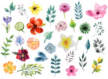 Watercolor floral elements set - flowers and leafs Royalty Free Stock Photos