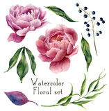 Watercolor floral elements set. Vintage leaves, eucalyptus, berries and peony flowers isolated on white background. Hand Stock Photography