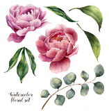Watercolor floral elements set. Vintage leaves, eucalyptus, berries and peony flowers isolated on white background. Hand Royalty Free Stock Photo
