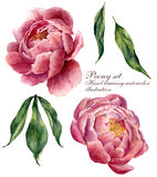 Watercolor floral elements set. Vintage leaves and peony flowers