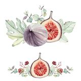 Watercolor floral and figs set. Floral decoration bohemian design Stock Photo