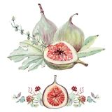 Watercolor floral and figs set. Floral decoration bohemian design Royalty Free Stock Photo