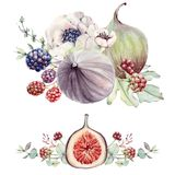 Watercolor floral and figs set. Floral decoration bohemian design Stock Photography