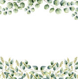 Watercolor floral frame card with silver dollar and seeded eucalyptus leaves. Hand painted border with branches and Royalty Free Stock Photo