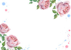 Watercolor floral frame with english roses. Hand drawn watercolor image with english roses stock photography