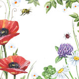 Watercolor floral frame with poppies, clover, chamomiles and bee Stock Image