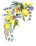 Watercolor floral greeting card, branch of fresh citrus fruit lemon stock illustration