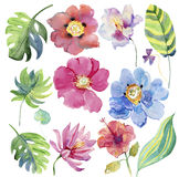 Watercolor floral illustration. Floral decorative element. Stock Photography