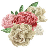 Watercolor floral illustration. Traditional paint. Hand drawing. Watercolor rose. Bouquet of roses. Floral. Vintage style. White background stock illustration
